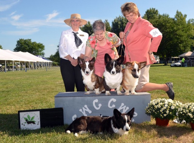 Dolly with her kids Jolene - Reserve Winners Bitch Patrick - Open Dog Cara - Open Bitch