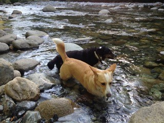 Lola and Miko river