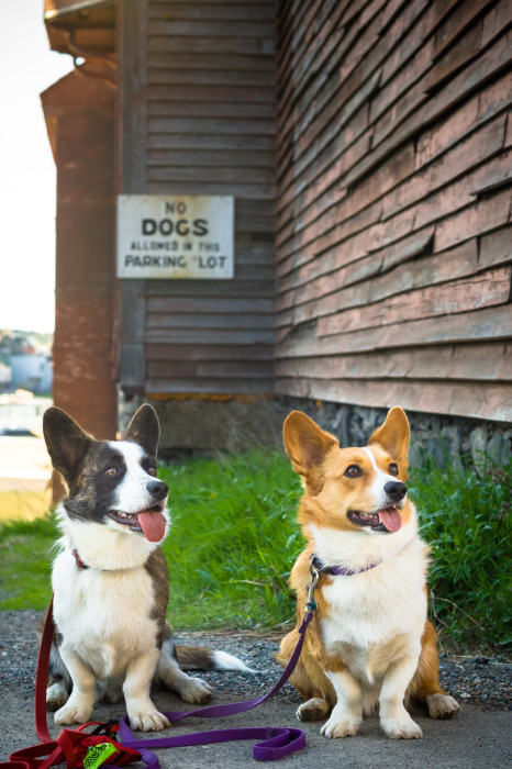 no dogs allowed - 2