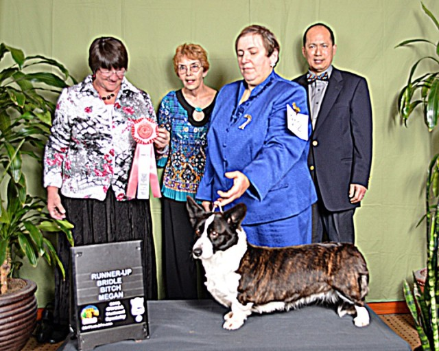 Dolly Runnerup Brindle bitch 2013