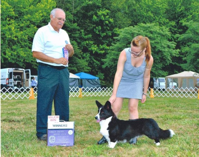 gryphon-winners-dog-1st-major-small