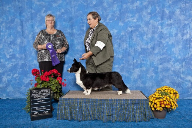 gryphon-winners-dog-cccc-2016-small