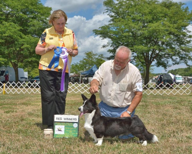 gryphon-reserve-winners-dog-cwccwr-2016-small