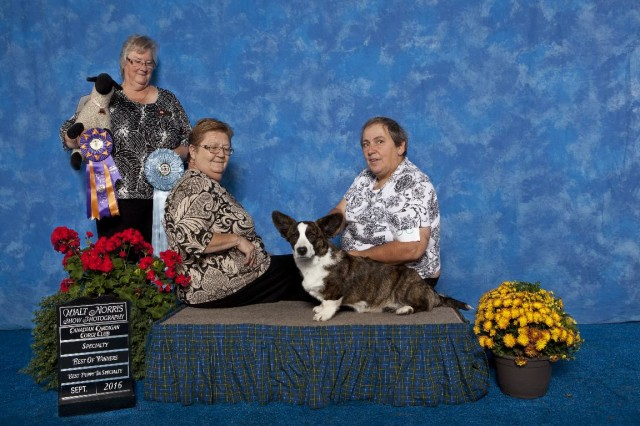 hope-best-of-winners-best-puppy-cccc-2016-small