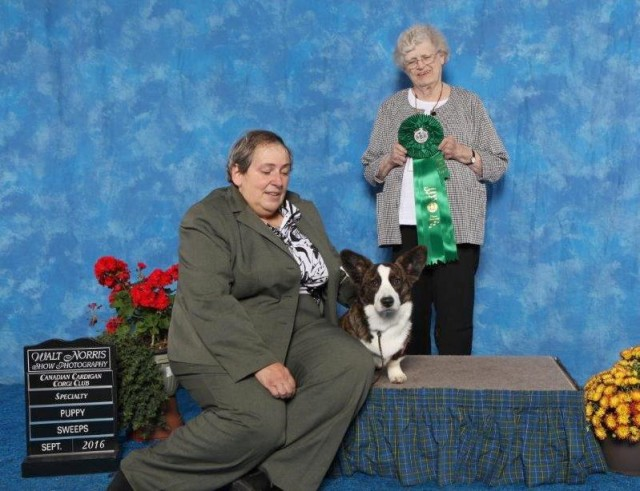 hope-best-in-juvenile-sweepstakes-cccc-2016